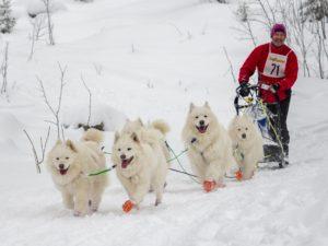 Lars Jämtsved Polarhunds SM-1 - kopia (2)